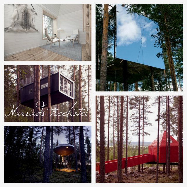 Harrads, Tree House, Sweden